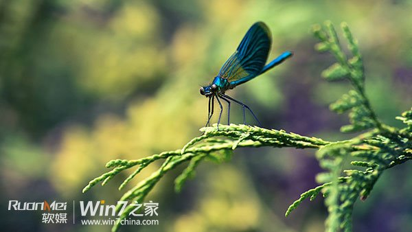 蜻蜓资源之家