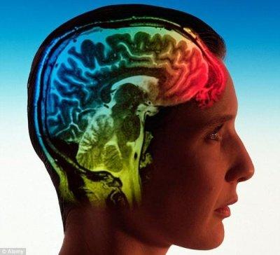 放进文件夹:科学家计划将人脑上传到电脑