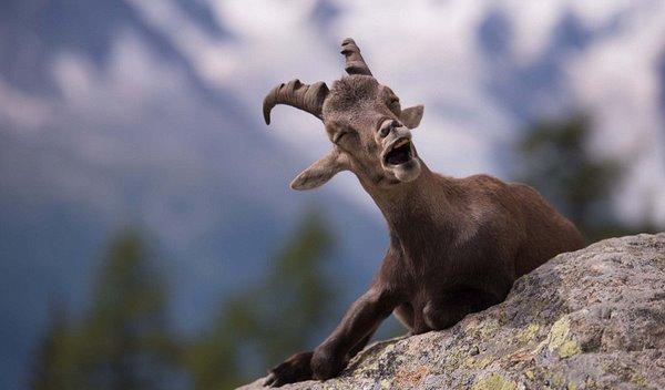 首届喜感野生动物摄影奖作品欢乐放送