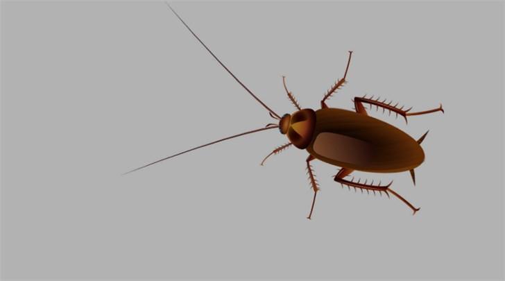 """""""小强""""真要杀不死了?研究指蟑螂将进化至对"""